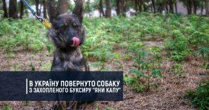 "В Україну повернуто собаку з захопленого буксиру ""Яни Капу"""