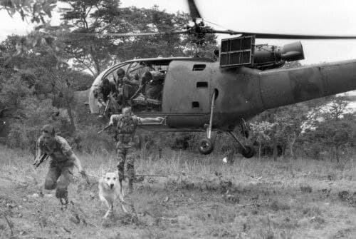 Використання службової собаки у ході переслідування